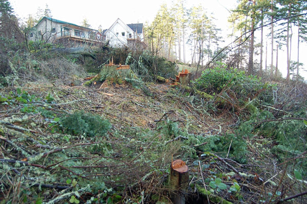 2008-01-13 Coupeville Parker Road Indian Hill Road illegal tree clear cut
