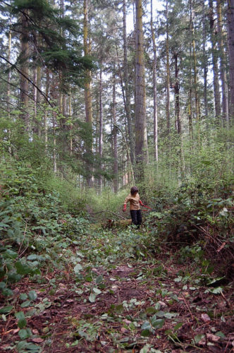 Clearing path along old logging road into property