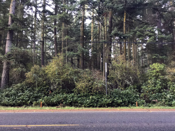 2019-10-08 Orange driveway entrance marker stakes at Price Sculpture Forest in Coupeville