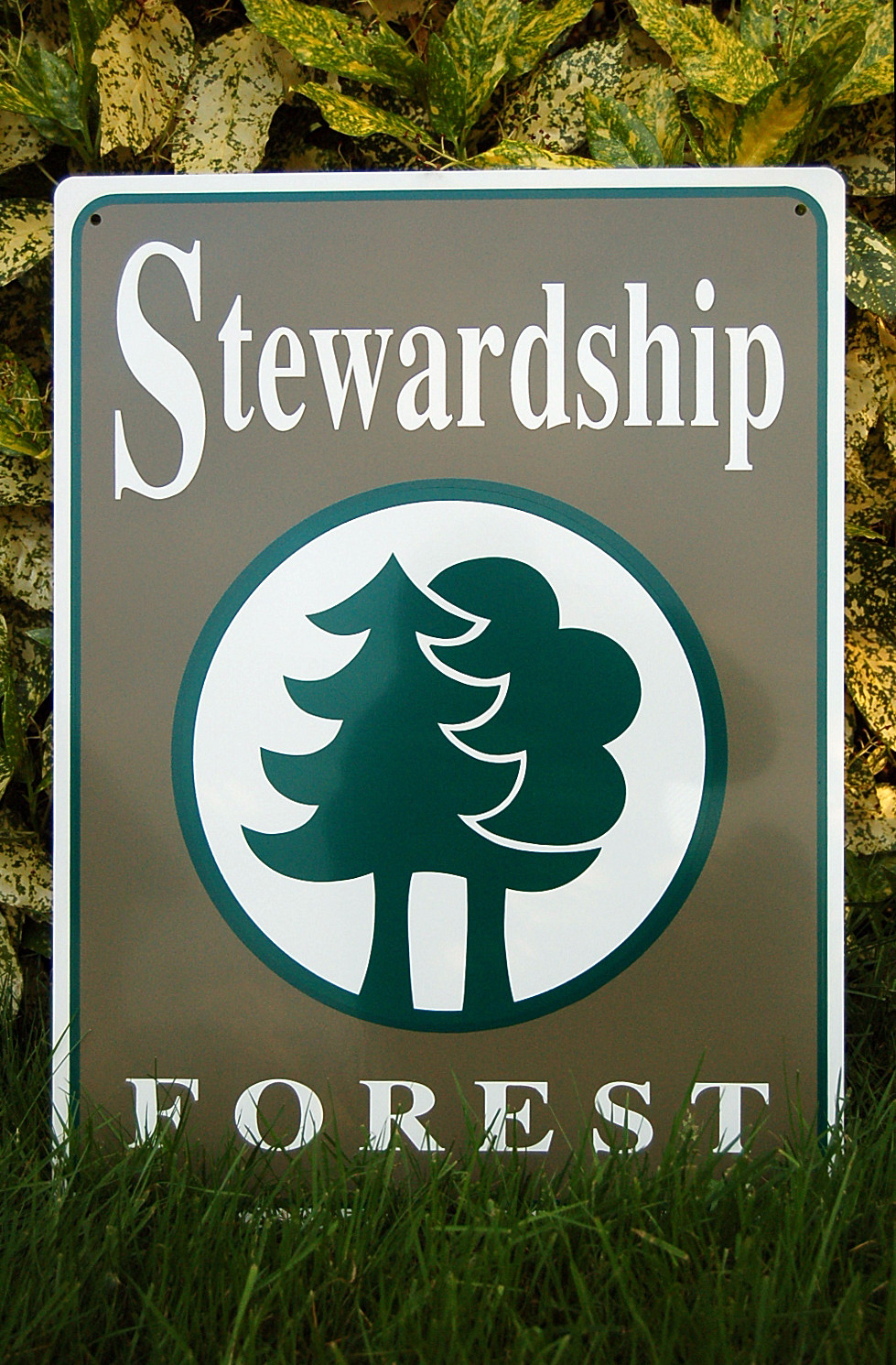 Stewardship Forest with Conservation Easements