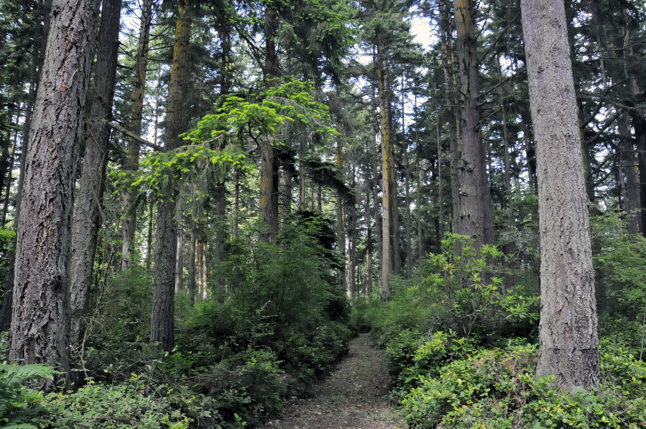 Trail into park at Price Sculpture Forest in Coupeville on Whidbey Island