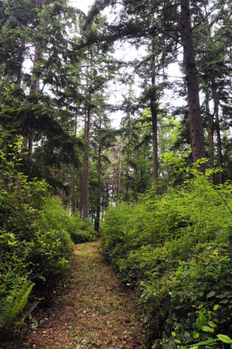 Trail through tall trees and bushes at Price Sculpture Forest park in Coupeville on Whidbey Island