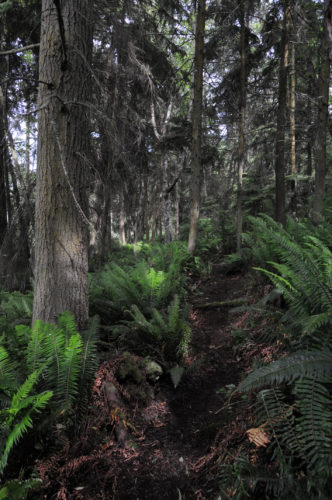 Trail through woods at Price Sculpture Forest park in Coupeville on Whidbey Island