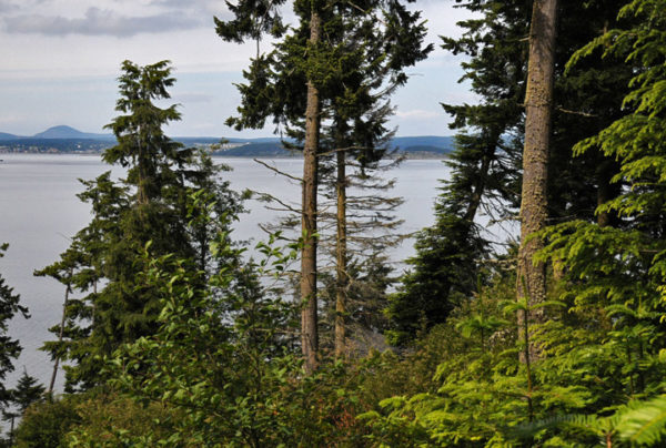 View looking northeast across property to Saratoga Passage from Price Sculpture Forest park in Coupeville on Whidbey Island