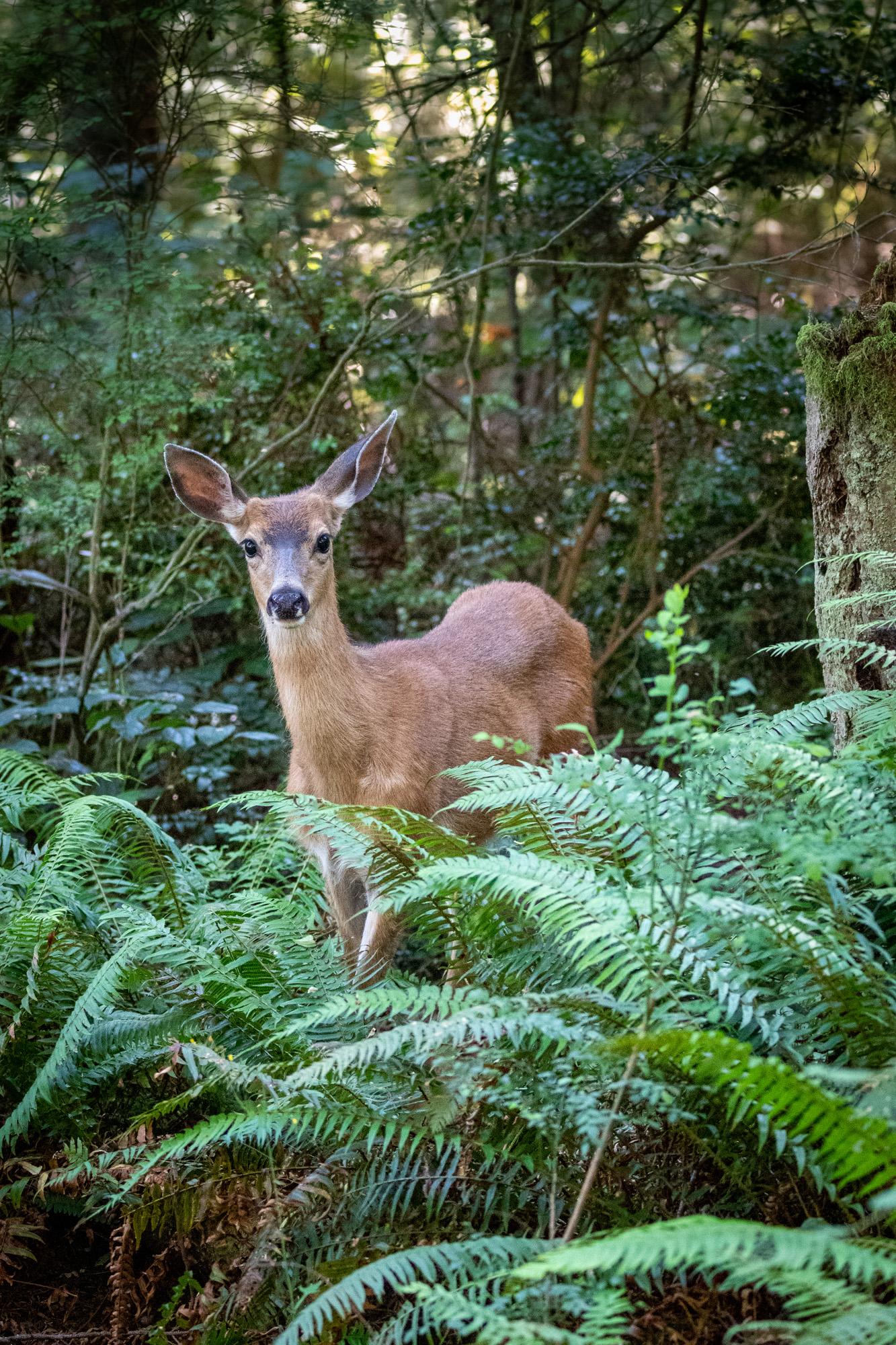 Deer says hello