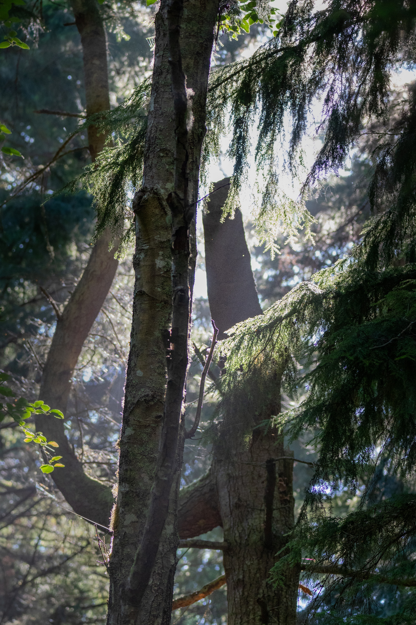 Trees and sunlight at Price Sculpture Forest by Gary Lemmon