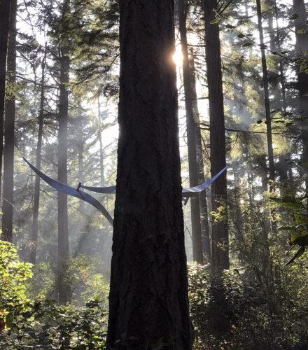 Jeff Kahn Wind Shear with sunlit fog at Price Sculpture Forest sculpture garden Coupeville Whidbey Island