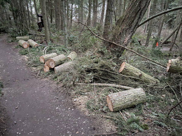 Logs cut from fallen tree on Whimsy Way at Price Sculpture Forest