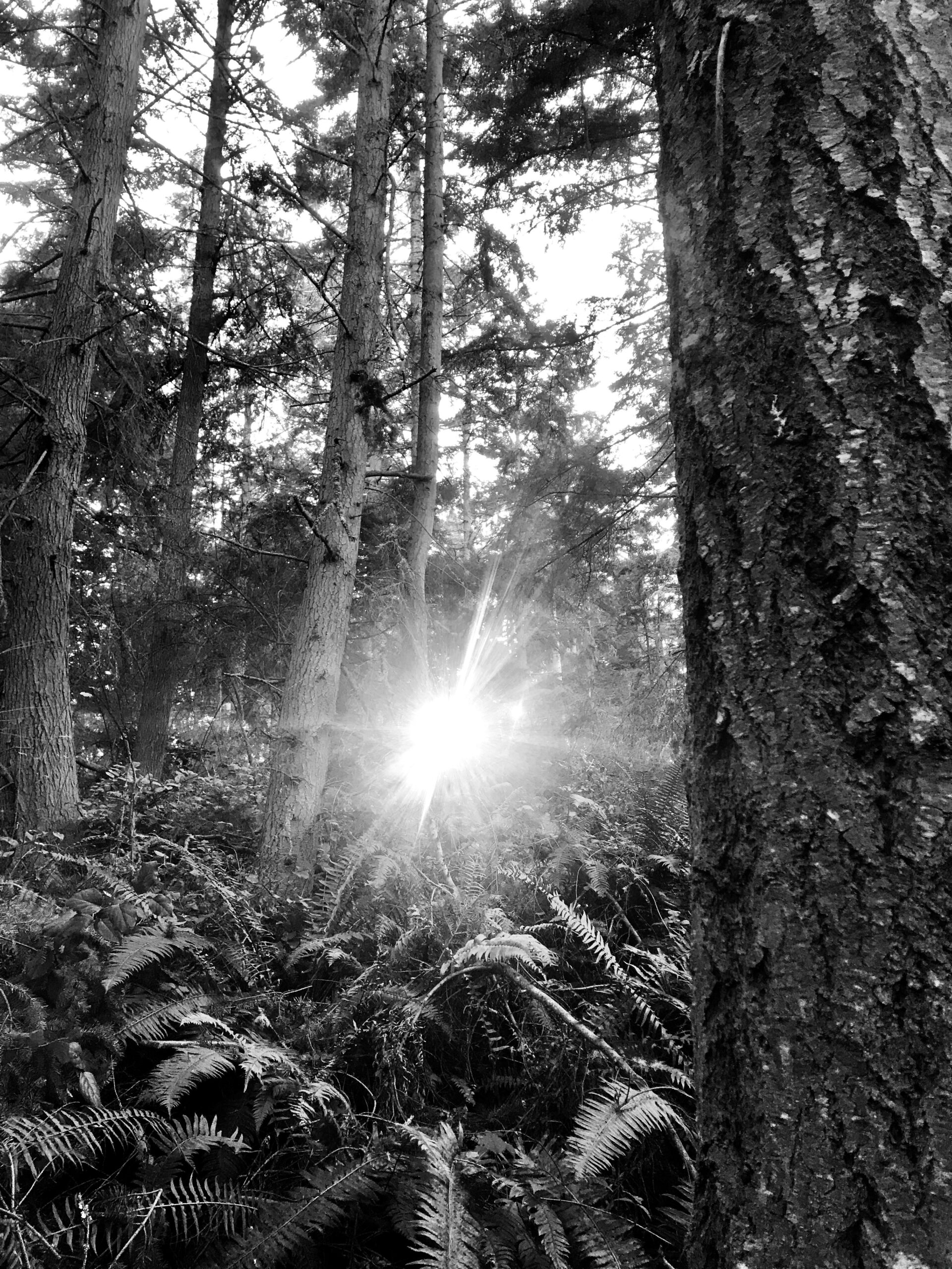 Sunlight through trees at Price Sculpture Forest - by Christina Whiting