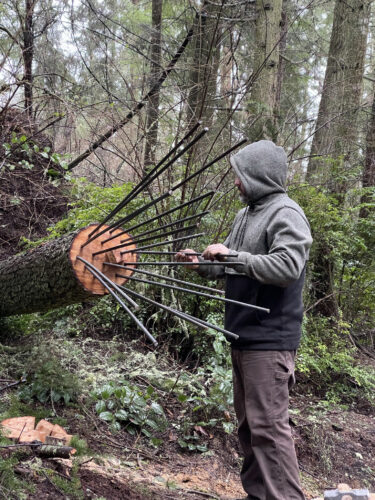 Anthony Heinz May inserting rebar into west tree trunk at Price Sculpture Forest in Coupeville Whidbey Island