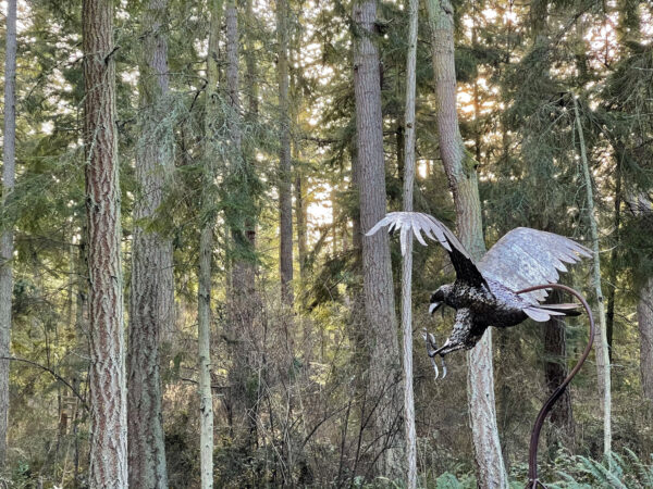 Greg Neal Attacking Eagle at Price Sculpture Forest park garden in Coupeville on Whidbey Island