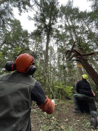 Arborist Jesse Brighten and Joe adjust cable rigging for Pat McVay Icarus Was Here phase 3 at Price Sculpture Forest