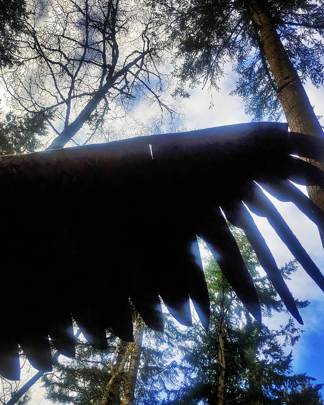 Greg Neal Attacking Eagle wing - photo by Shannon Nicole Bobo of Greenbank WA
