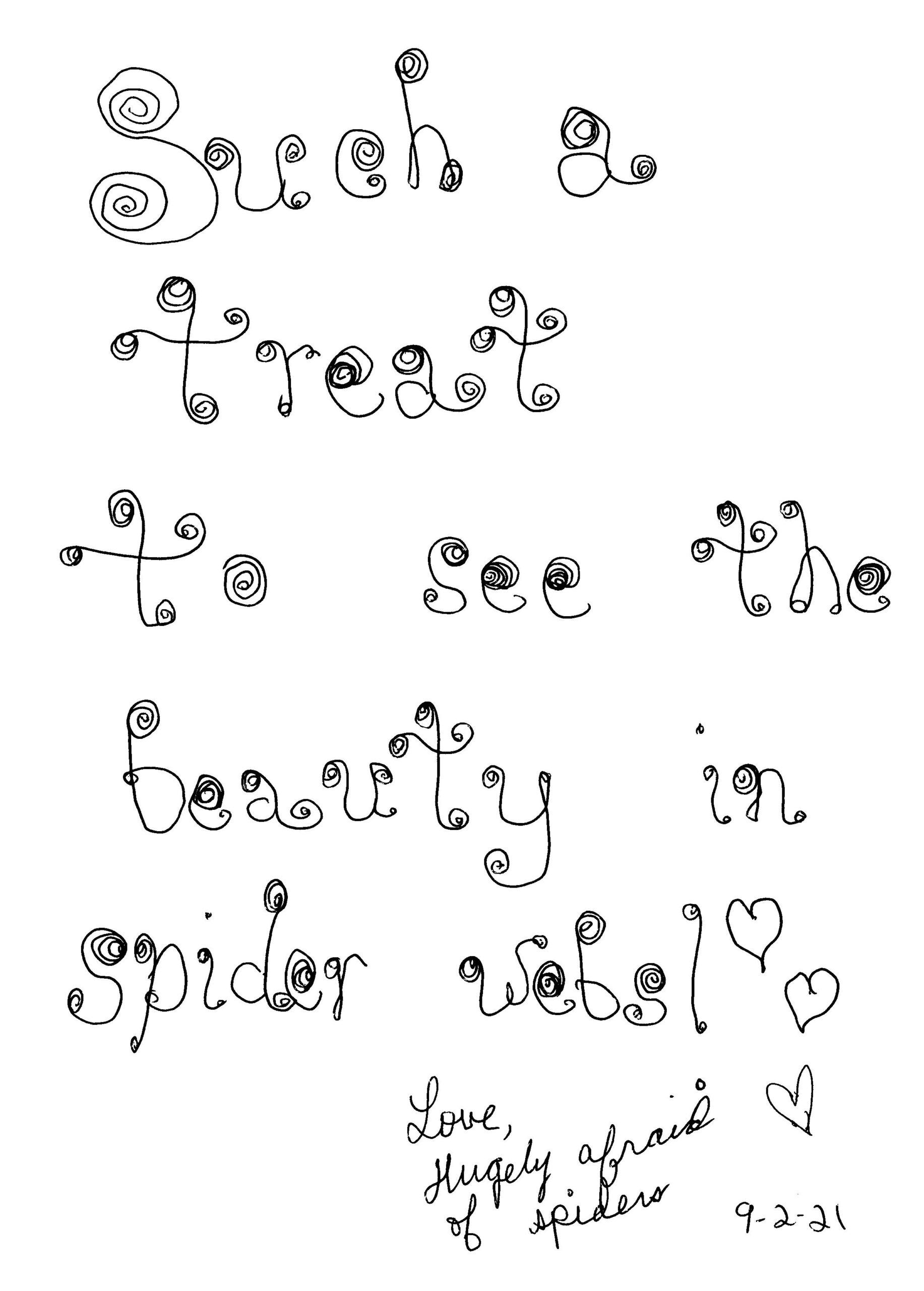 Beauty in Spider Webs